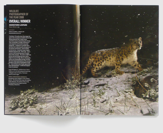 Design for BBC Wildlife magazine supplement by Nick McKay, second inside spread